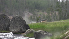 4K Deer Runs Through Lush Landscape Mist Rises From Hot Spring Geyser Stock Footage