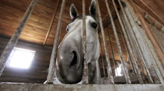 The horse in the stables before arrival Stock Footage