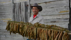 Pir del Rio area of Cuba with tobacco farmer drying on racks tobacco for cigars - stock footage
