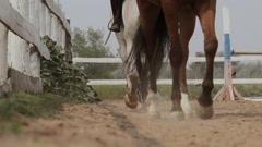 Running horse on the sand Arkistovideo