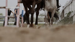 Running horse on the sand Stock Footage