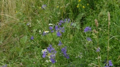 Alpine flowers in early spring Stock Footage