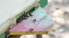 The entrance beehive Stock Footage