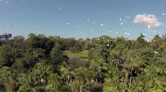 Drone Footage of birds flying in the Botanical Gardens of Sydney Stock Footage