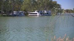 Murray River at Mildura as swans swim past. Stock Footage