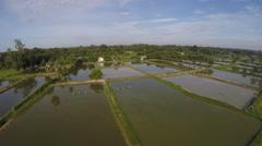 Aerial shrimp farm bog 4k Stock Footage