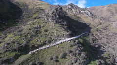 Sheep muster on high country station Stock Footage