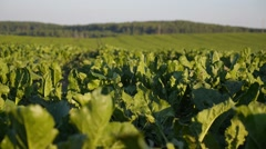 Green Field with Organic Plants in Soil Stock Footage
