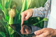 Farmer using digital tablet computer in corn field - stock photo