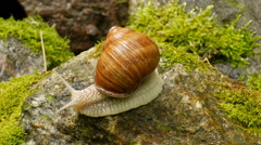 Snails in the wild nature. - stock footage