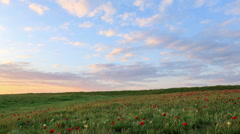 Blooming tulips in the steppe at sunset, Rostov region, Russia, (Time Lapse) Stock Footage