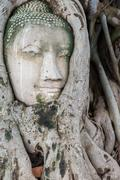 Head of sandstone Buddha in the tree roots. Wat Phra Mahathat, Ayutthaya, Tha Stock Photos
