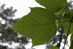 Green leaf with stalk Stock Photos