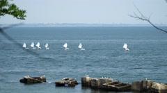 A flock of seabirds sitting on rocks in the sea Stock Footage