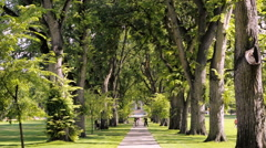 Tree alley with old trees on university campus. Stock Footage