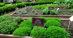 Apothecary garden, herbs, Botanical Garden of MSU, Moscow Stock Footage