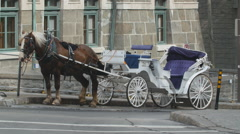 Working horse and carriage in Quebec City, Canada. Stock Footage