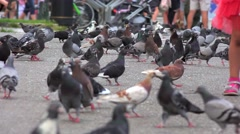 Children chase pigeons at the Aristotelous Square. Thessaloniki, Greece. Stock Footage