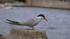 Seagull sitting on the Fontanka River Stock Footage