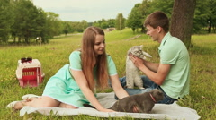 Guy and girl in a meadow with Scottish Fold and gray British cats Stock Footage