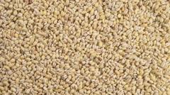 Pearl barley (Rotation) Stock Footage