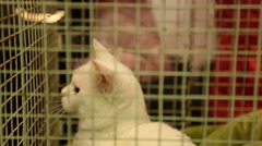 Cute white cat playing with future owner through iron cage in pet shelter Stock Footage