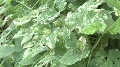 diseased plant,infection, pollution - stock footage