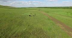 Cows walk across the field Stock Footage