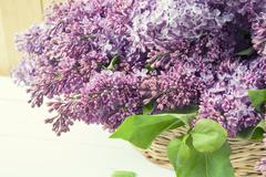 Branches of flowering purple lilac syringa Stock Photos