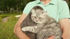 Man holding hands on the Scottish Fold cat and gray British cat Stock Footage