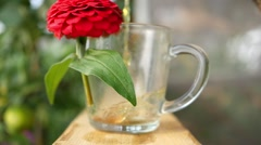 herbal tea being poured into a mug with a flower - stock footage
