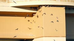 Swallows nesting under bridge, flying in graceful slow motion Stock Footage