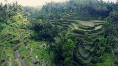 Rice field terrace Bali Stock Footage