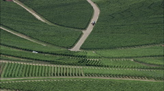 Vineyards aerial Stock Footage
