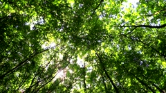 Wind moves branches in green forest Stock Footage