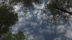 Time lapse of clouds forming over tall pine trees Stock Footage