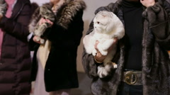 Lady in fur coat holding fluffy short-haired cat in hands, pet exhibition Stock Footage