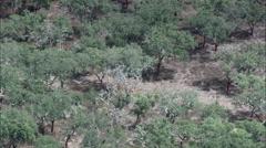 Cork Trees And Hacienda Stock Footage