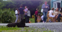 Black Cat with yellow eyes sits on path with garden party in background. 4K Stock Footage