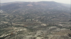 A Landscape Of Olive Trees Stock Footage