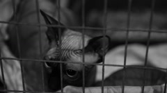 Scared homeless Sphynx cat sitting in cage at pet shelter, animal rescue Stock Footage