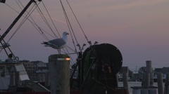 Seagull standing on Dock Stock Footage