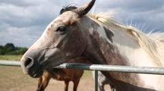 Horse: close up of the head Stock Footage