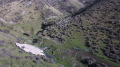 Mustering flock of sheep on high country New Zealand farm Stock Footage