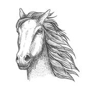Racehorse stallion sketch for horse racing theme - stock illustration