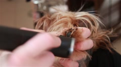 Groomer processes the Yorkshire Terrier nails Stock Footage