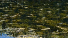 Fishing in a mossy mountain lake with mosquitos Stock Footage