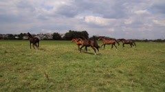 Horse, horses in a meadow,horse running Stock Footage