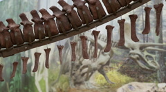 The tail part of a dinosaur skeleton Stock Footage