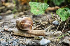 Detail photo of beautiful snail or slug in outdoors Kuvituskuvat